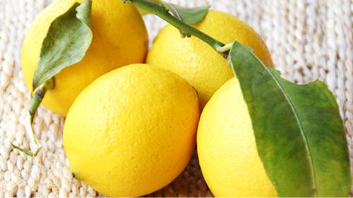 海老屋 素材へのこだわり レモン果汁